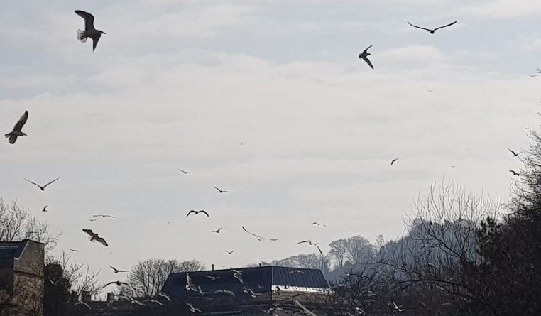Seagulls at Sainburys