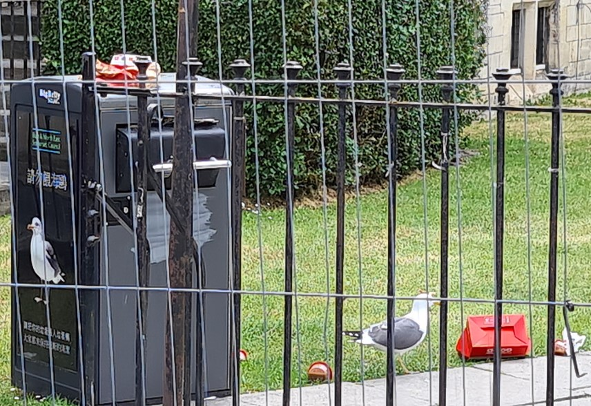 Seagulls at the bins